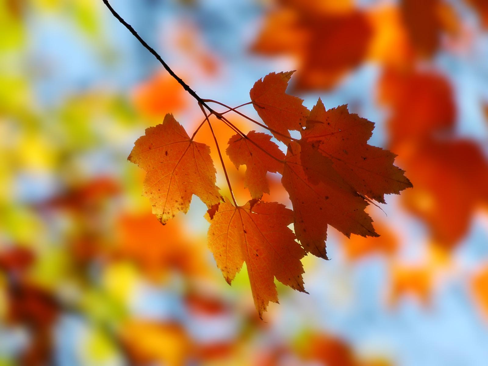 Autumn Leaves Border Frame Free Stock Images