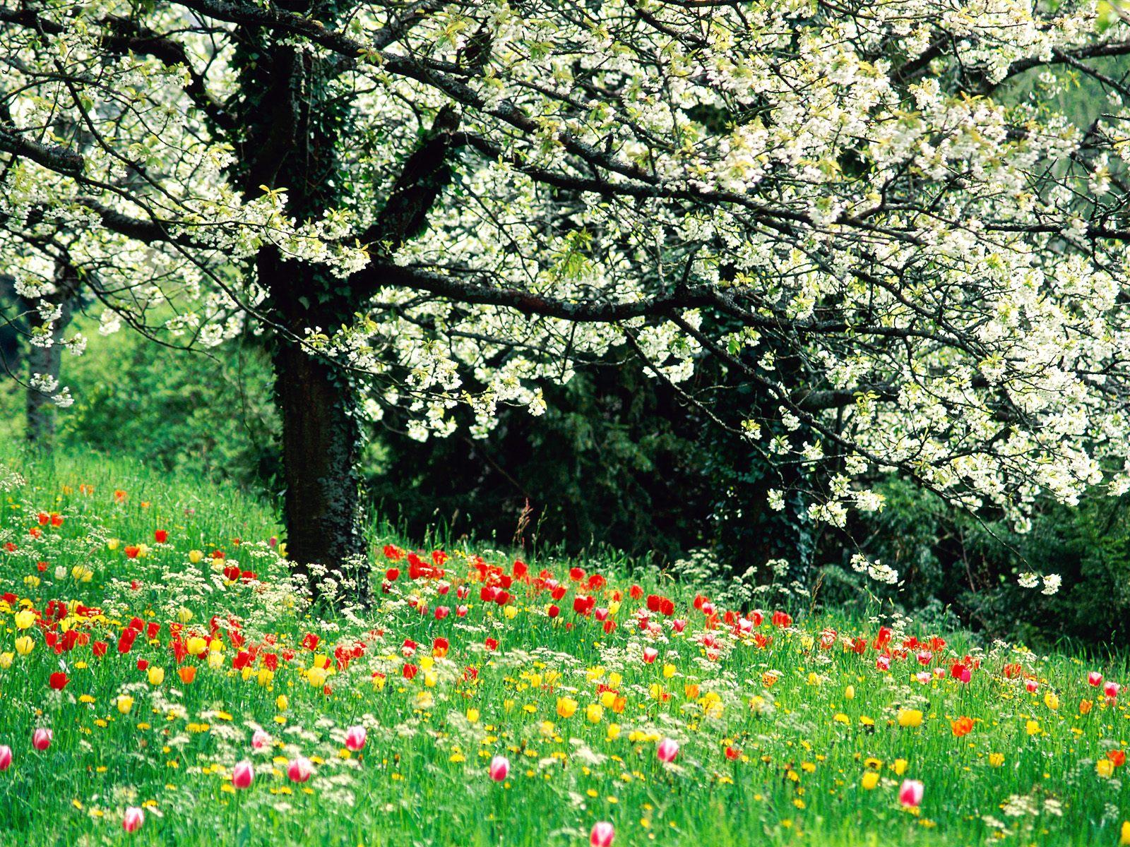 Spring Wallpapers: Cute Spring Wallpaper