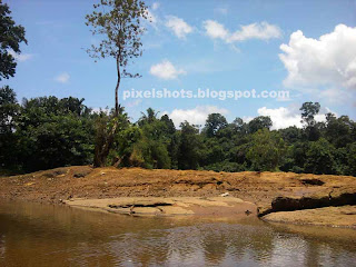 kerala river deltas,tree growing in river delta filled with sand and rock debris,kallada riverbed photos,kerala waterbodies