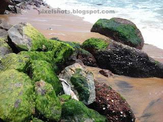 varkala beach specialties,kerala beach side rocks,green ferns in varkala beach rocks