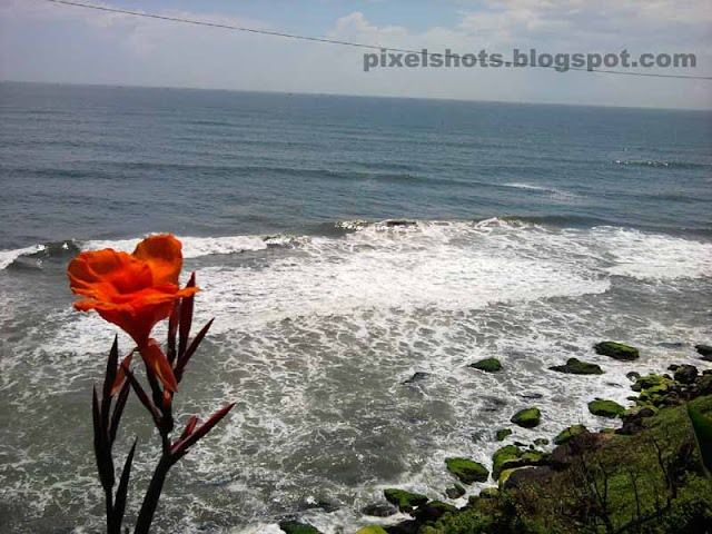 red flower seen aside the beach of varkala kerala,flowers over mountain cliffs aside kerala beaches,varkala beach and sea photos,flower and waves