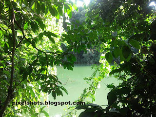 green river water,kallada river photo,river flowing aside deer-park,forest river,rivers of western ghats