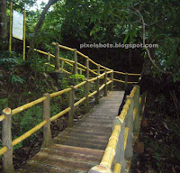 nature trails through western ghat forests,part of eco tourism sculpture garden in thenmala,bamboo like concrete fencing through forest pathways in thenmala sculpture park leisure zone,concrete imitation of bamboos for eco tourism park