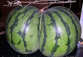 Jay-Z asks for watermelon shaped like Beyonce's breast