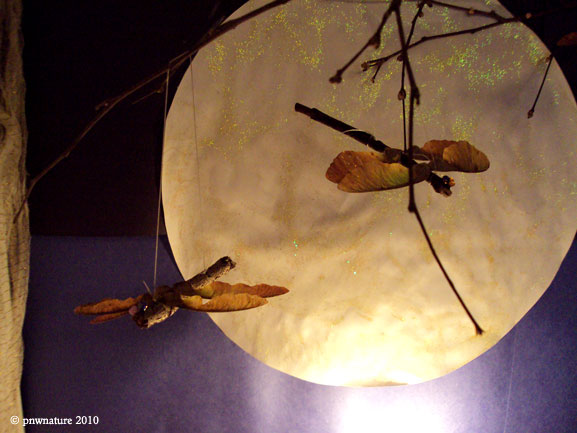 Our Twig and Maple Seed Dragonflies