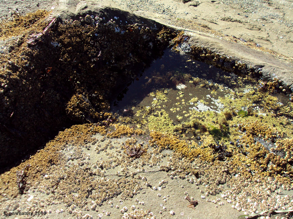 Pacific Northwest Tide Pool Tours are a Favorite Family ...  |Pacific Northwest Tide Pool