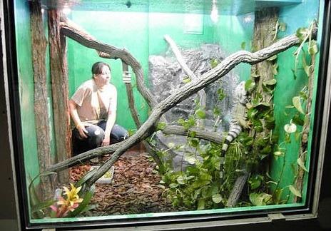 Something adult iguana cages