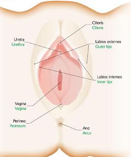 Agujero extra en la vulva