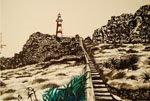 Cape Palliser 2