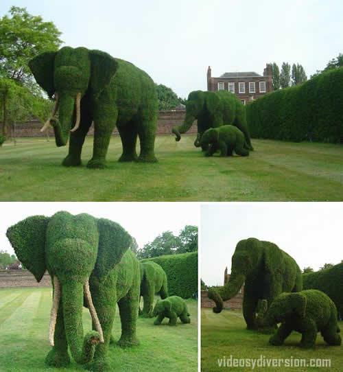 Jardin elefantes con setos y poda