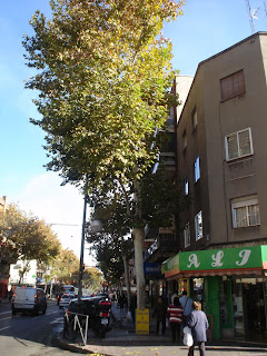 Madrid. La ciudad de Europa con más árboles