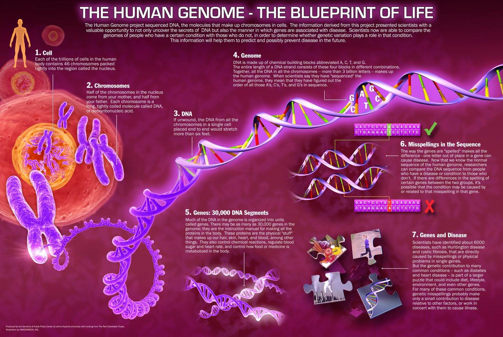 Genome project