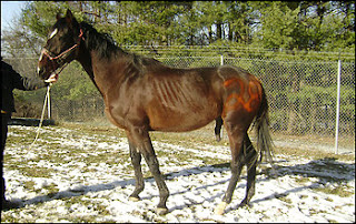 HORSE NEGLECT CASE IN LOUDOUN COUNTY | Virginia Thoroughbred