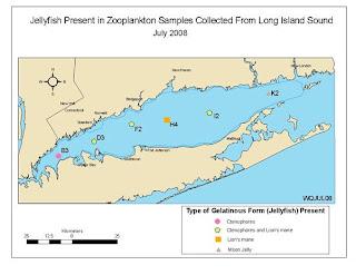 sphere Long Island Sound Jellyfish