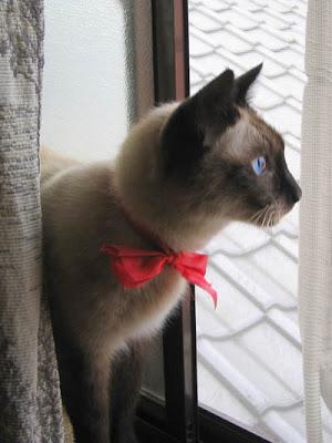 meow!!~~
