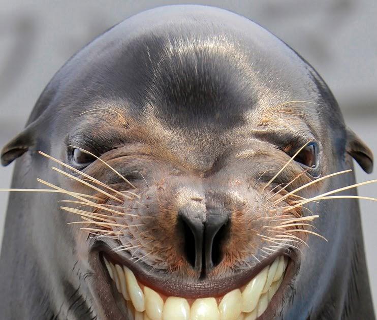 Image Gallery seal teeth
