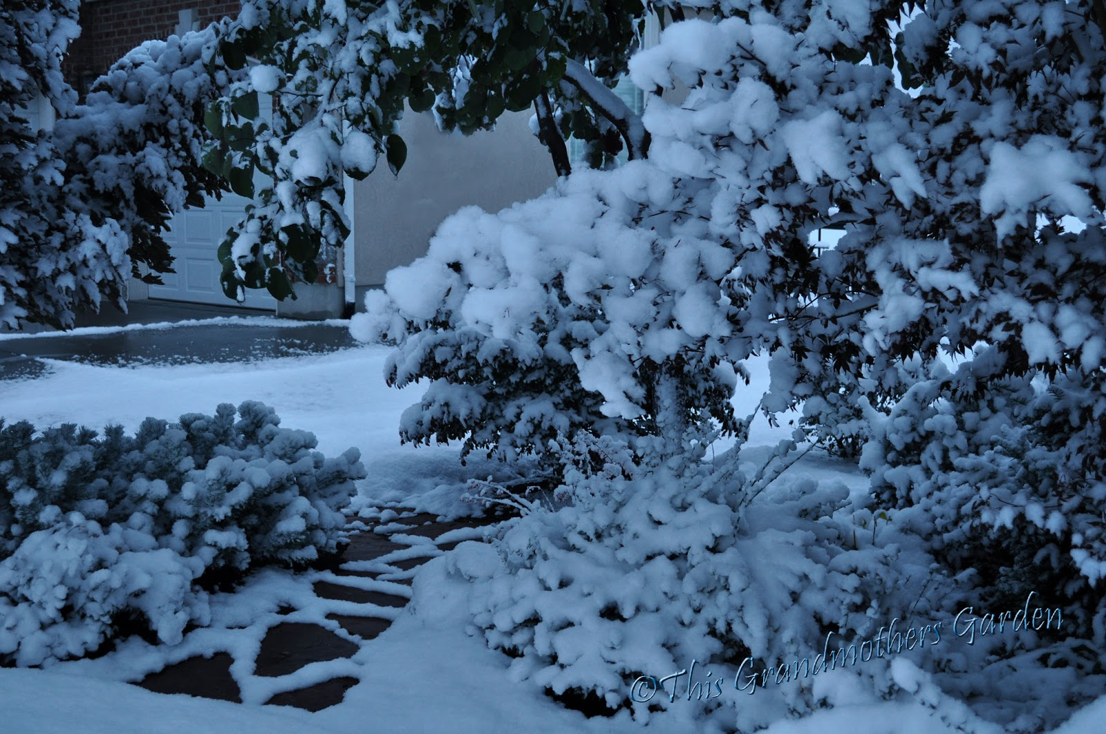 This Grandmother's Garden: When Does Autumn Turn to Winter?