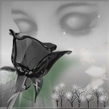 https://1.bp.blogspot.com/_ResmQ7XGPdE/SUk0J109kQI/AAAAAAAADx0/2d-L8p3lKYI/s400/rosto_rosa_negra.jpg