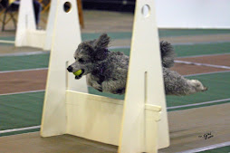 SONIC FLYBALL