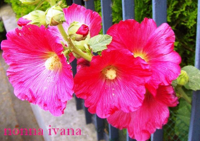Cucinario Di Nonna Ivana 28 Giugno 2010 Buon Compleanno Signora
