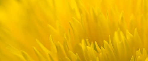 Sunflower by Dave