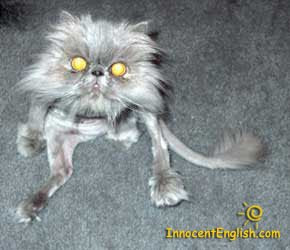 WOw is that UGLYUgliest Cat Alive