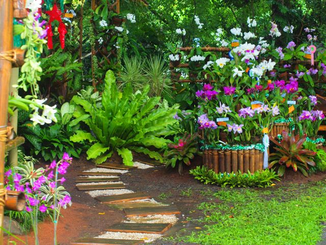 Andrea 39 s plants photos and travels university of the for Garden design ideas in philippines