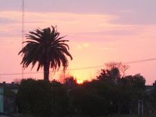 Las palmeras dominan el paisaje