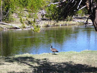Elk Island Glide