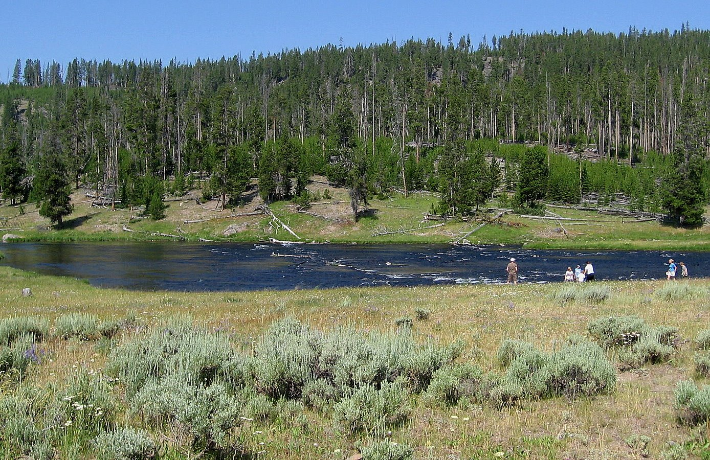 Fly fishing in yellowstone national park upcoming for Fishing in yellowstone