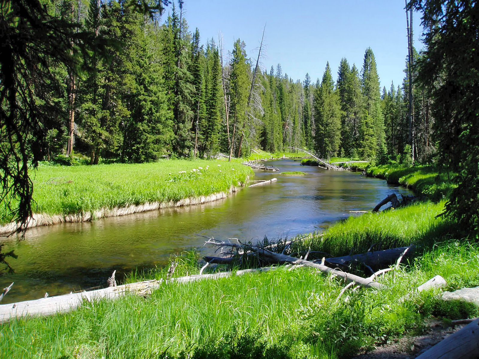 Fly fishing in yellowstone national park upcoming for Fly fishing yellowstone