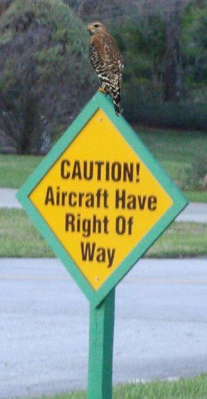 [Hawk+on+Sign.jpg]
