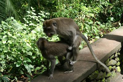 The Monkeys Mask - amazoncom