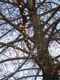 [tree&lights.JPG]