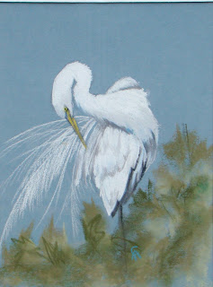 Great+White+Heron