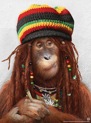 bbe72567dad Rasta Orangutan (Image by Julia Malanjina)