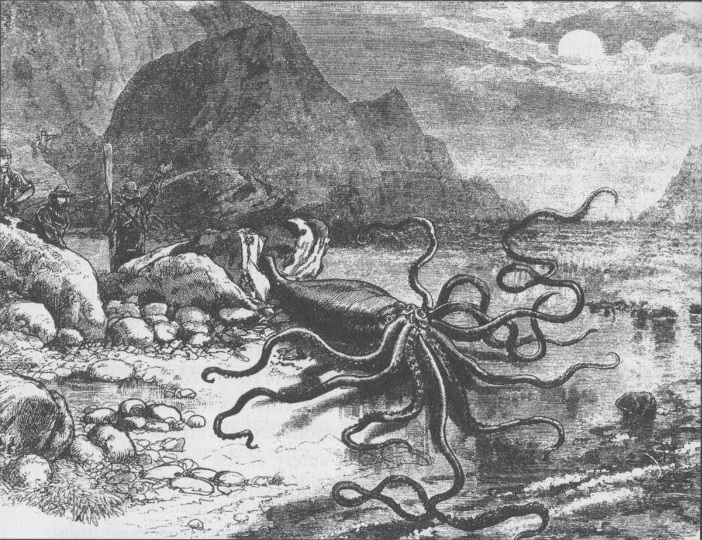 Vintage Giant Octopus Drawing Ten weeks to impress y...