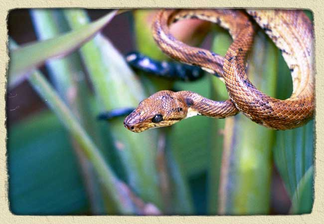 All Different Types of Snakes: Amazon Rainforest Snakes