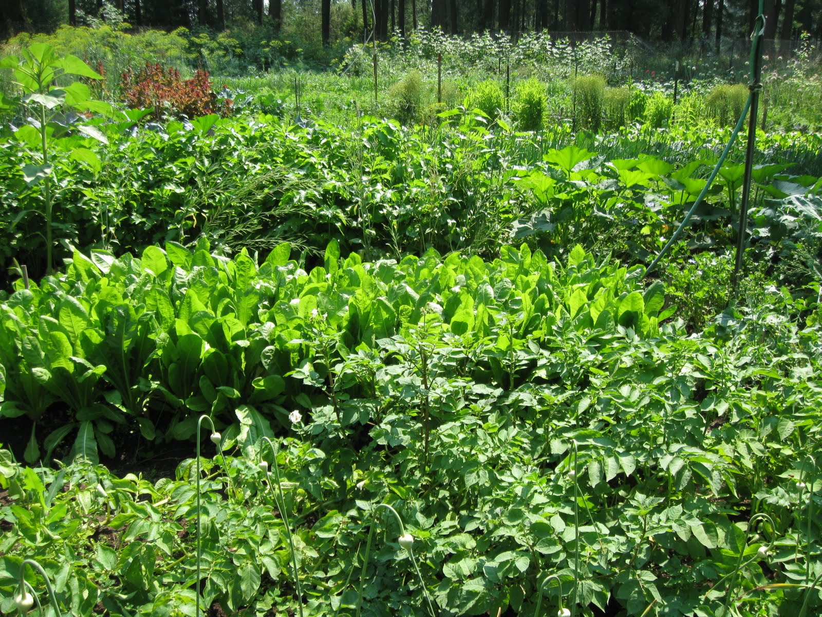 the description of the subsistence method of growing crops horticulture Is a social system based on non-mechanized subsistence farming,  societies,  which rely on the cultivate of herd animals for subsistence.