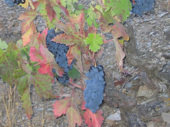 2.colores del a viña