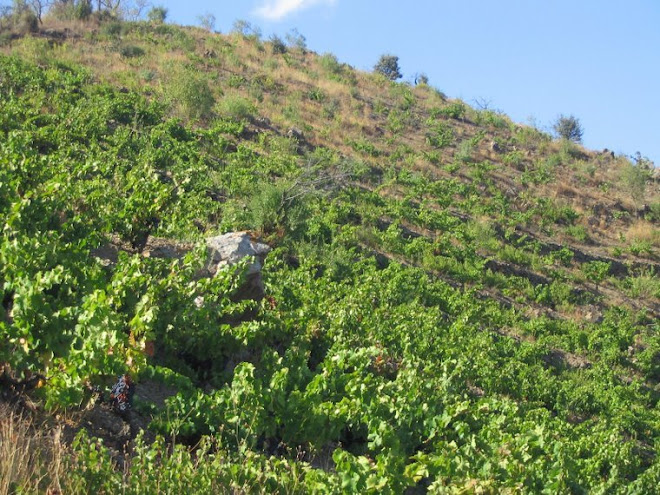 Las uvas arriba se las comen los pajaros