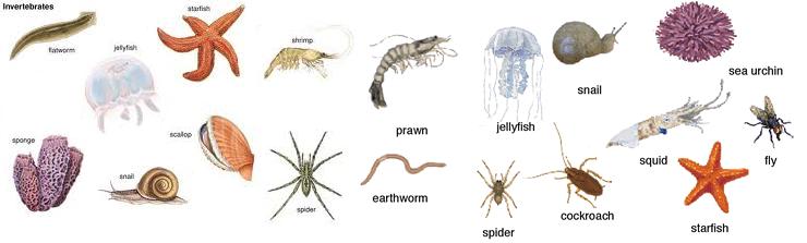 Biologia Animada O Reino Animal Invertebrados