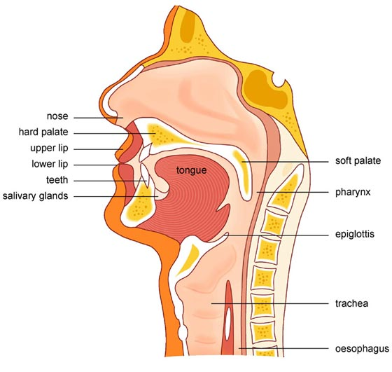 Flap At Back Of Throat 4