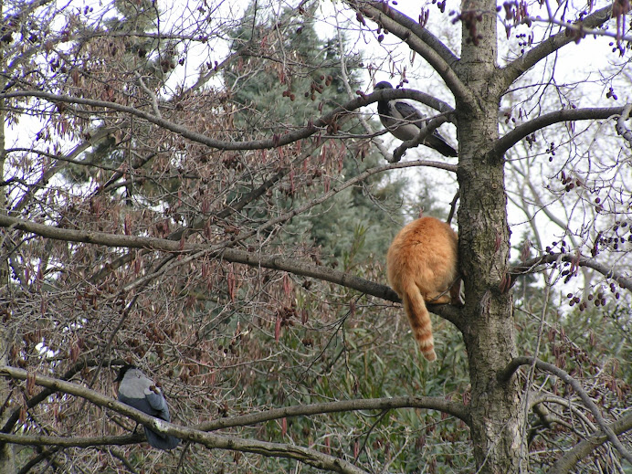 cat and crows on the tree