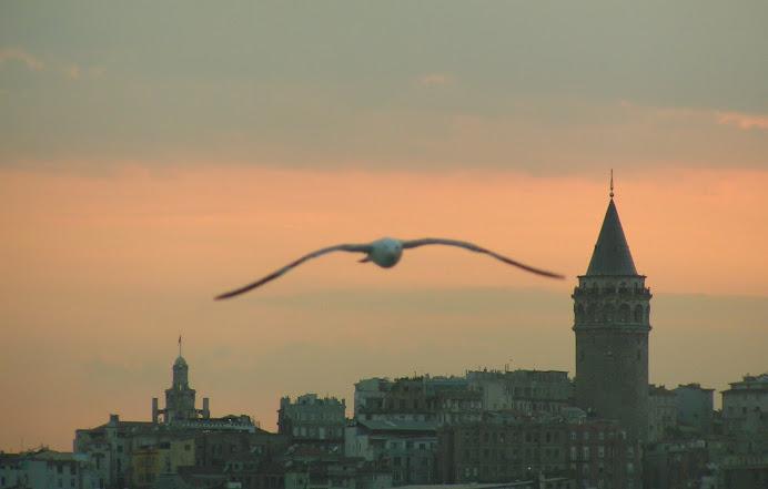 seagull at sunset Galata Tower