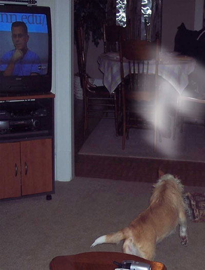 Do Cats And Dogs See Spirits