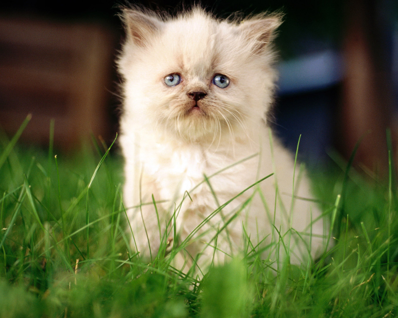 Strictly Wallpaper: Wallpapers For Cat Lovers 4