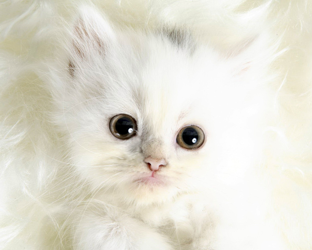 Strictly wallpaper wallpapers for cat lovers 5 - Cute kittens hd images ...