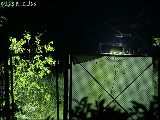 Gaismas lamatas priekš naktstauriņiem