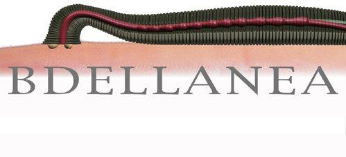 BdellaNea